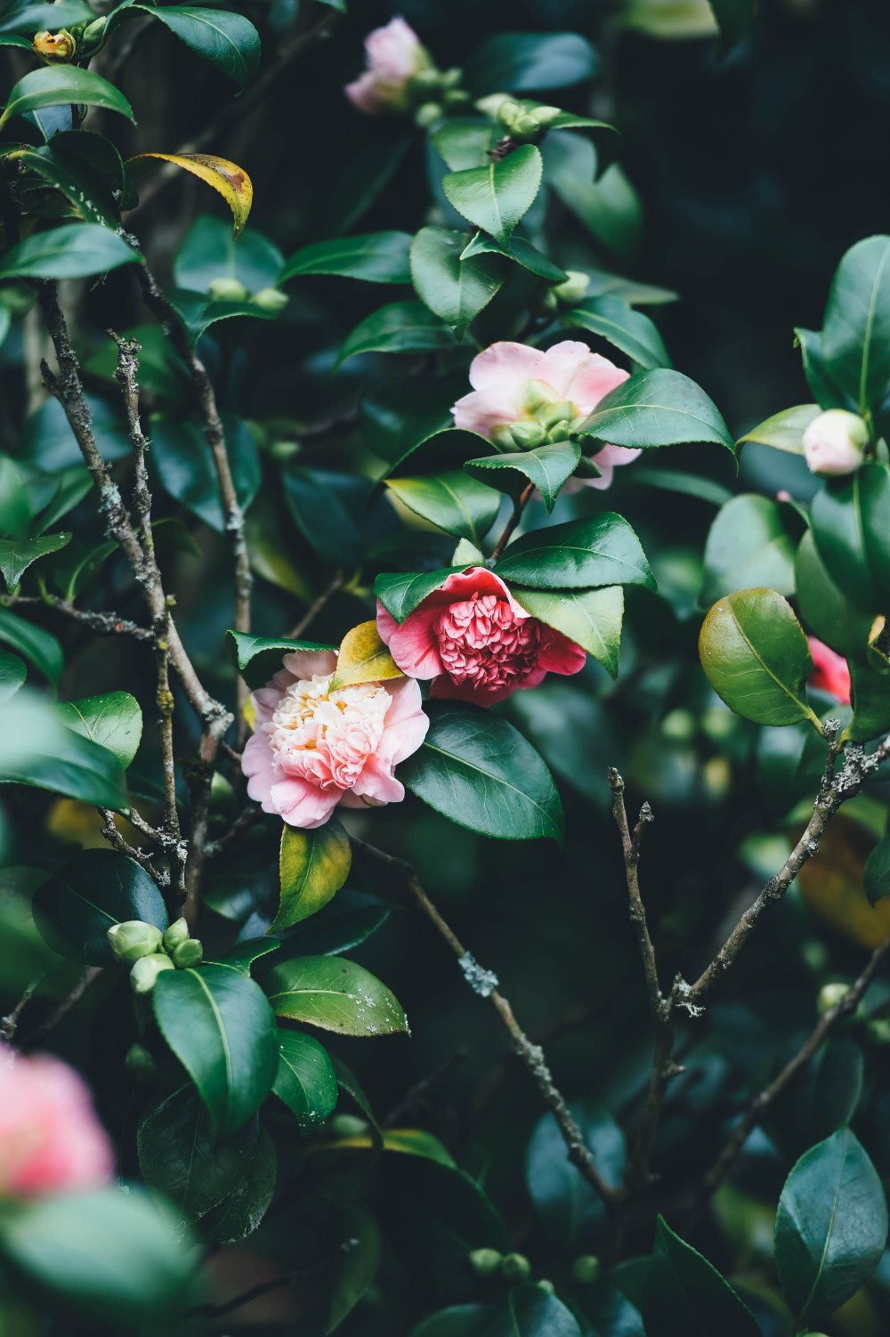 iPhone wallpapers | 19 best free iphone wallpaper, plant, grey, and flora photos on Unsplash