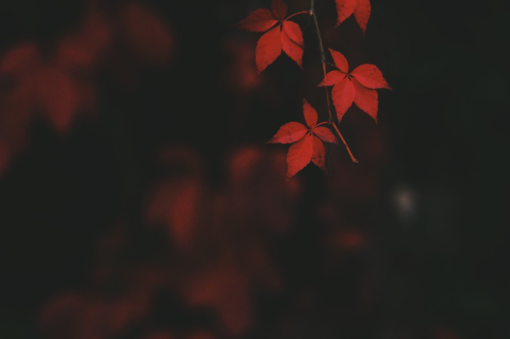 1000+ Fall Wallpapers [Download] | Unsplash