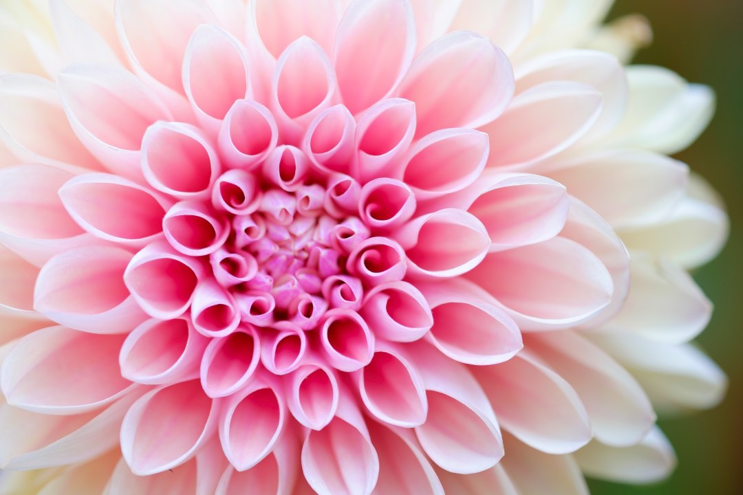 Download Flower Wallpapers [HD] | Unsplash