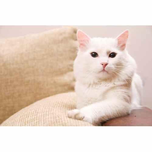 Medium Crop Of Miralax For Cats