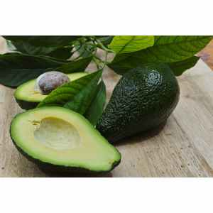 Wondrous Avocado Poisoning Dogs Avocado Poisoning Dogs Treatment How Long Do Avocados Last After Cut How Long Do Avocados Last After You Cut M