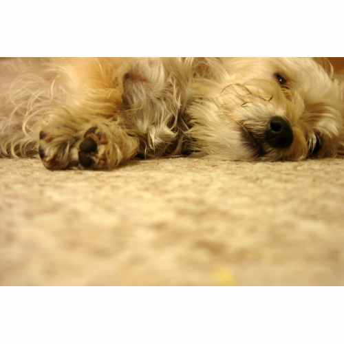 Medium Crop Of Can I Give My Dog Benadryl For Itching