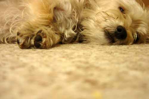 Medium Of Can I Give My Dog Benadryl For Itching
