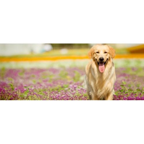 Medium Crop Of Friendliest Dog Breeds