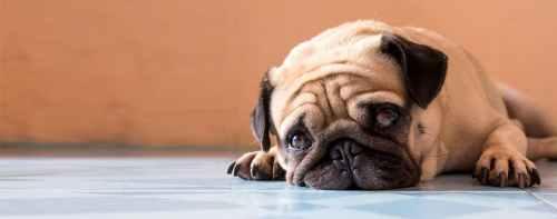Medium Of Do Dogs Cry