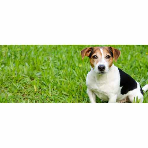 Medium Crop Of Reverse Sneezing Dog