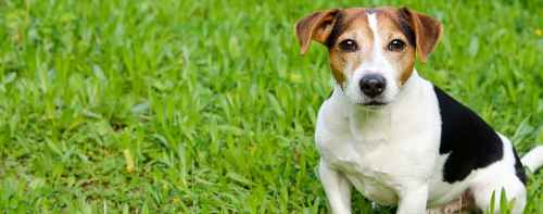 Medium Of Reverse Sneezing Dog