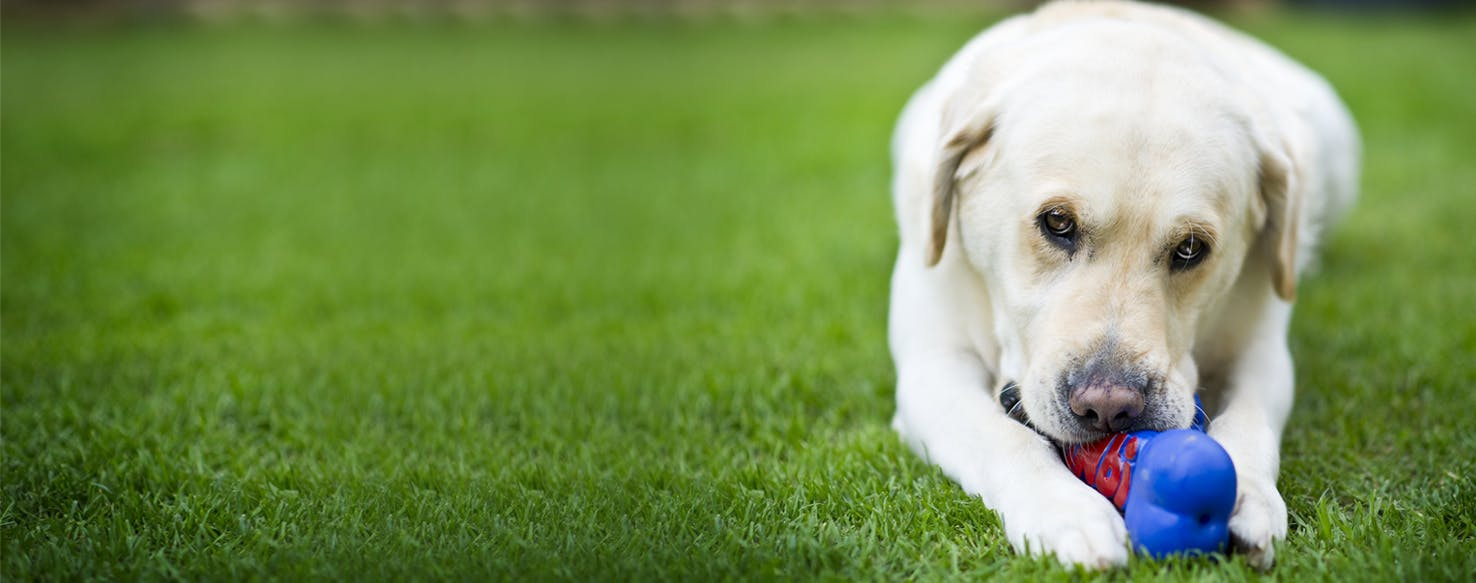 Cordial Why Dogs Like Squeaky Toys Why Do Dogs Destroy Squeaky Toys Y Do Dogs Like Squeaky Toys bark post Why Do Dogs Like Squeaky Toys