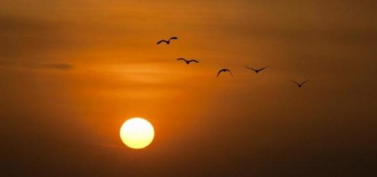 Resultado de imagem para imagens de gratidão é libertação