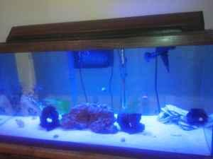 40 gallon saltwater and 30 gallon freshwater fish tank aquarium fish