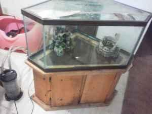 Fish tank games 100 gallon for sale a 180 gallon fish for Corner fish tank for sale