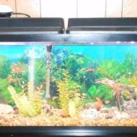 55 gallon fish tank lid - 55 gallon tank stand hood lights tank 55 gal deminsions 48 in l x 12