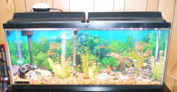 55 gallon fish tank lid 55 gallon tank stand hood lights for 55 gallon fish tank with stand