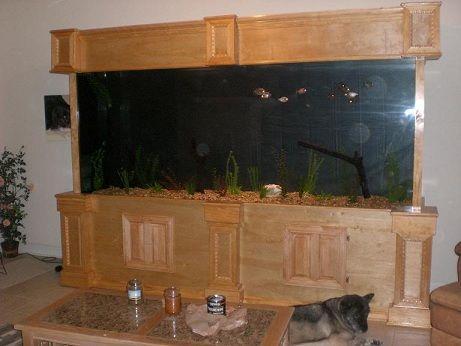 aquarium wedding photography nc aquarium ga aquarium sc aquarium