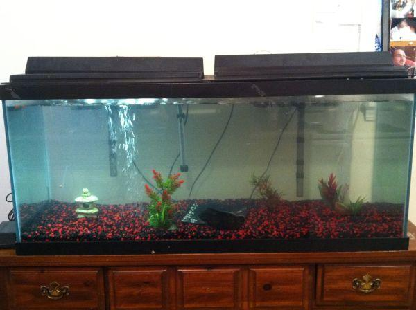 75 gallon aquarium for sale uniquarium 75 gallon tube