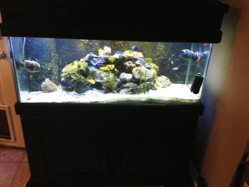 Beautiful 75 gallon saltwater aquarium   Refugium   ReefKeeper 2 for