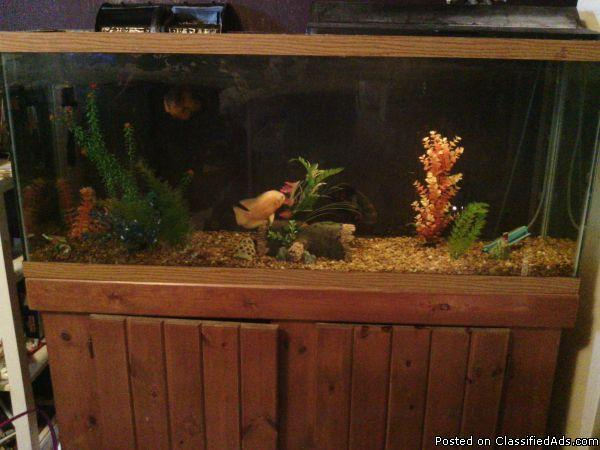 Fish tank decorations 55 gallon prices 2017 fish tank for 55 gallon aquarium decoration ideas