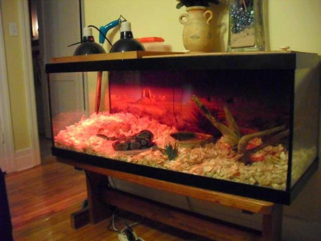 ft ball python with 65 gallon glass tank for sale in Welland