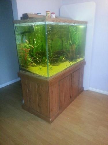 700 OBO150 GALLON GLASS FISH TANK (see details) in Sacramento