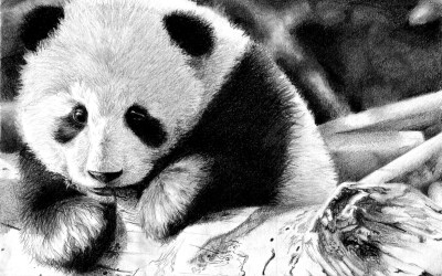 192 Panda HD Wallpapers | Backgrounds - Wallpaper Abyss - Page 6