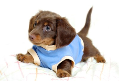572 Puppy HD Wallpapers | Backgrounds - Wallpaper Abyss