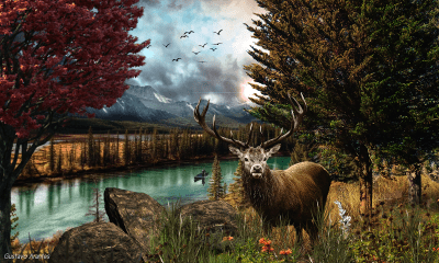 Buck in Mountain Forest Full HD Wallpaper and Background Image | 2000x1200 | ID:766465