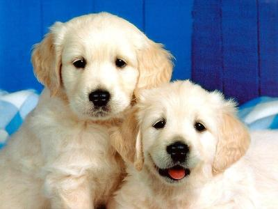 Cute Dog Wallpaper - Dogs Wallpaper (13936376) - Fanpop