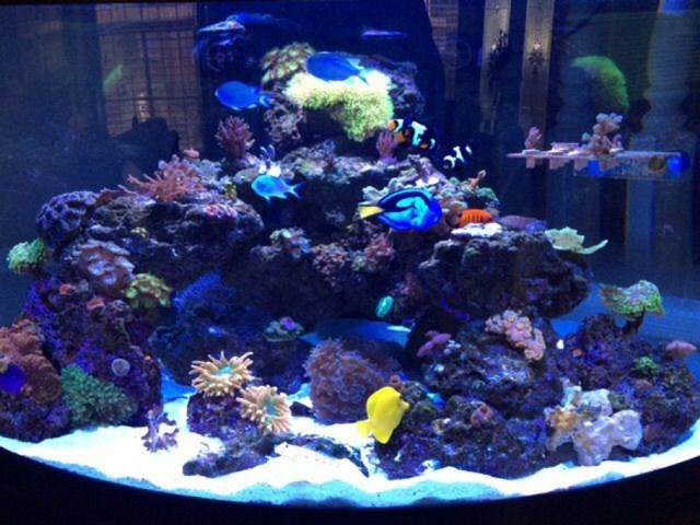 Joey808's Reef Tanks Photo (ID 42397)   Full Version | RateMyFishTank