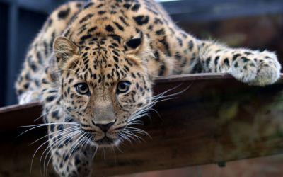 Jaguar HD Wallpaper | Hintergrund | 2560x1600 | ID:276135 ...