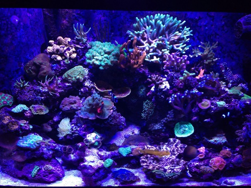 Most Beautiful Reef Tanks ( 2014 ) | RateMyFishTank.com