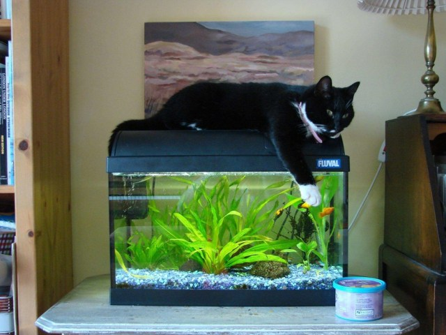 Photo Caption: This is my 10 gallon tank. My cat Lizzie likes to lie