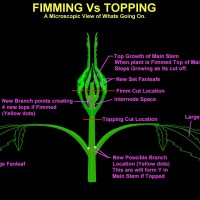 Topping and FIMming