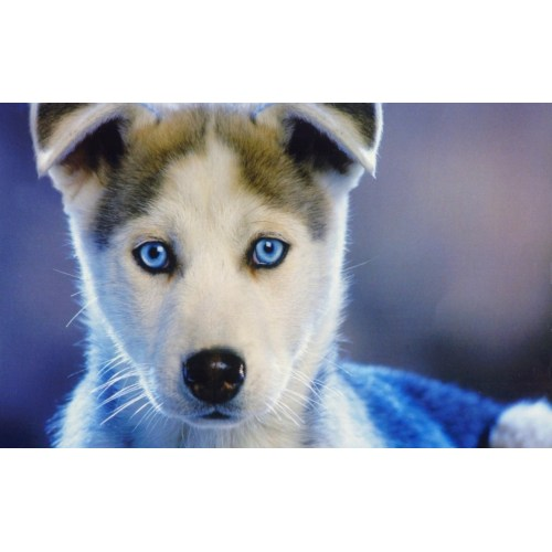 Medium Crop Of Dogs With Blue Eyes