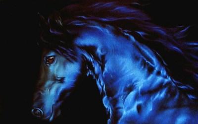 Beautiful Horse - Horses Wallpaper (22410562) - Fanpop