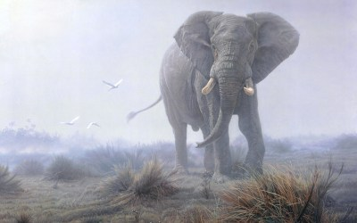 Elephant HD Wallpaper | Background Image | 1920x1200 | ID:314509 - Wallpaper Abyss