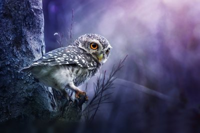 Owl Wallpaper and Background Image | 1900x1267 | ID:338208 - Wallpaper Abyss