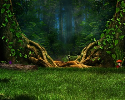 Enchanted Forest HD Wallpaper | Background Image | 3000x2400 | ID:688657 - Wallpaper Abyss