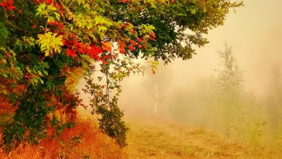 Tree in Foggy Autumn Forest HD Wallpaper | Background Image | 1920x1080 | ID:701425 - Wallpaper ...