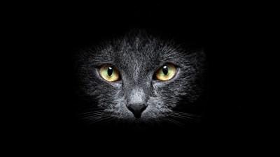 Black Cat HD Wallpaper | Background Image | 1920x1080 | ID:321290 - Wallpaper Abyss