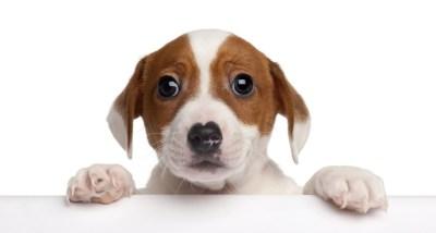 Puppy 5k Retina Ultra HD Wallpaper and Background | 6606x3544 | ID:376115