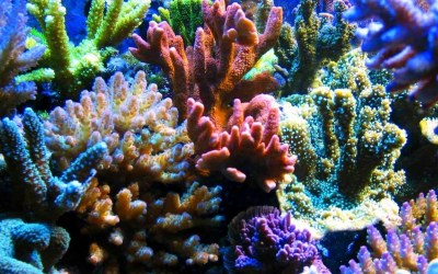 Coral HD Wallpaper | Background Image | 1920x1200 | ID ...