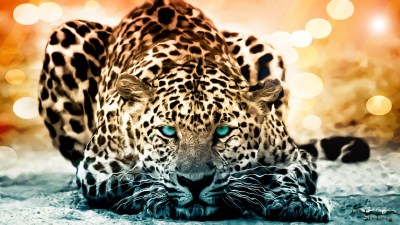 192 Jaguar HD Wallpapers | Backgrounds - Wallpaper Abyss