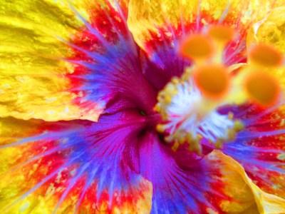 Amazing flower 4k Ultra HD Wallpaper | Background Image | 4608x3456 | ID:500519 - Wallpaper Abyss