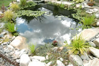 aquatics pond services home garden services business garden services