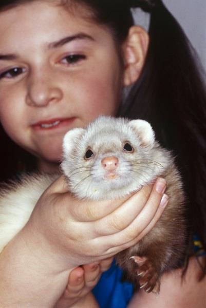 DOES MY FERRET HAVE HERPES? 3