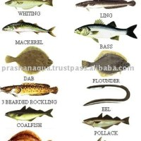 types of fishes with pictures and names