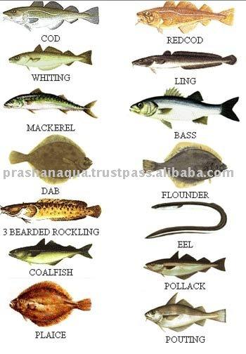 sea fish types productsindia sea fish types supplier sea fish 350x504