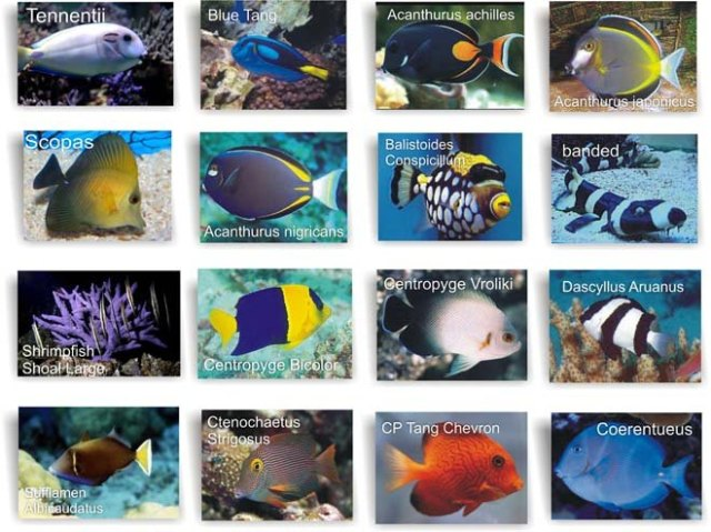 MARINE FISH products,Malaysia MARINE FISH supplier