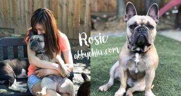 美國華盛頓交流計畫 | 我的寶貝 Rosie 法國鬥牛犬 法鬥 French Bulldog