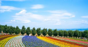 北海道夏天代表景點!富良野「富田農場」薰衣草花田